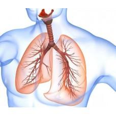 """курс повышения квалификации """"Заболевания органов дыхания в практике врача-терапевта"""""""