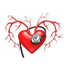 """курс повышения квалификации """"Заболевания сердечно-сосудистой системы в практике врача-терапевта"""""""