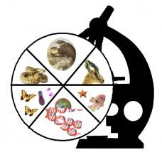 Основы подготовки к ОГЭ по биологии